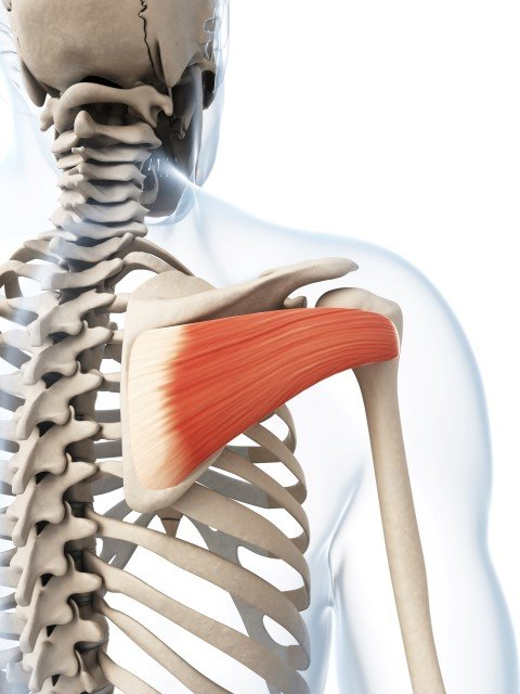 Shoulder Pain Relief | Dynamic Health