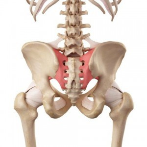 The SIJ is a common source of back pain