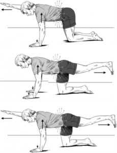 The birdogg is a safe and effective reactivation exercise